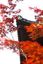 Free Temple Roof In Autumn Royalty Free Stock Photography - 251077