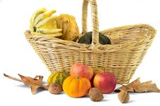 Free Fall Cornucopia Royalty Free Stock Photo - 250555