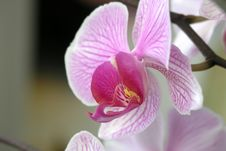 Free Orchid3 Stock Images - 250624