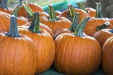 Free Small Pumpkins Royalty Free Stock Images - 251099