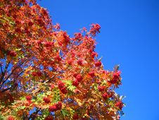 Free Mountainash In The Sky Royalty Free Stock Photo - 251105