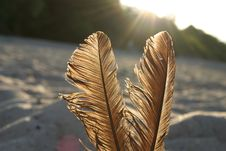 Free Feathers Against The Sun Royalty Free Stock Image - 251476