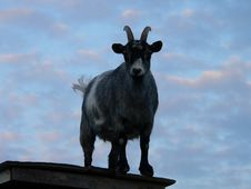 Free Goat On A Shed Stock Image - 251711