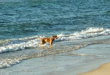 Playing Dog In The Sea Stock Photos