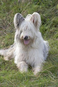 Free Dog Stock Images - 254254