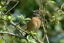 Free Little Bird Stock Photos - 256033