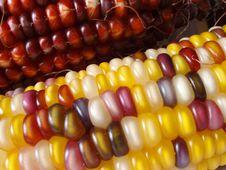 Free Indian Corn Stock Photos - 258793
