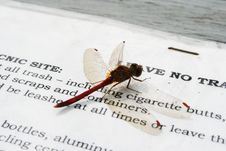 Free Dragonfly Stock Photo - 259560
