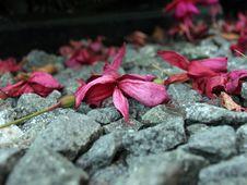 Free Fuschia On Stones Stock Photography - 259952