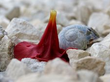 Free Flower Head And Shell On Stones Stock Images - 259954