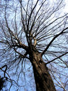 Free Tree In The Open Air. Royalty Free Stock Photos - 2502828