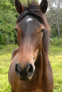 Free Brown Horse Stock Images - 2504494