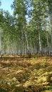 Free Autumn Wood Stock Image - 2508311