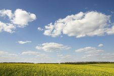 Free Rape Field Stock Photos - 2501433