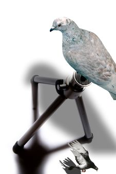 Free Two Pigeons And A Tripod Royalty Free Stock Photos - 2501568