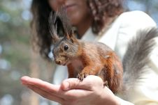 Free Women With Squirrel Royalty Free Stock Image - 2501696