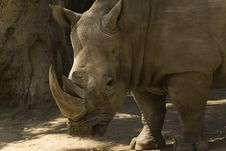 Free Rhino Royalty Free Stock Image - 2503056
