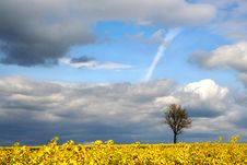 Free Landscape - Yellow Field Stock Photography - 2503262