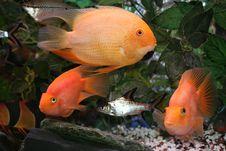 Fish World Stock Photography