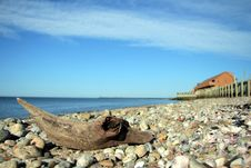 Free Driftwood On A Montauk Beach Royalty Free Stock Images - 2504049