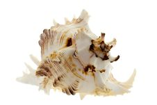 Spiral Shell On White Royalty Free Stock Image