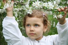 Little Girl And A Blossoming C Royalty Free Stock Photo