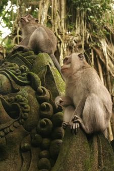 Monkeys On A Statue Stock Photo