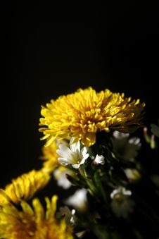 Free Dandelion Royalty Free Stock Photography - 2505567