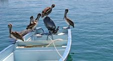 Free Pelicans On A Boat Stock Photos - 2506943