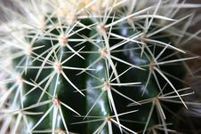 Free Cactus Stock Photography - 2508292