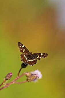 Free Butterfly Stock Photo - 2508520
