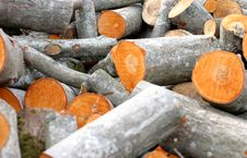 Free Timber Pile Royalty Free Stock Photos - 2508758