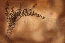 Free Old Herbarium Background Royalty Free Stock Photography - 2509417