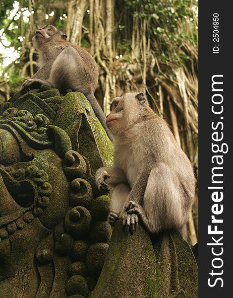 Monkeys on a statue