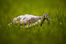 Free Turtle In The Grass Royalty Free Stock Photos - 25000208