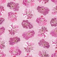 Free Seamless Pattern With Floral Background Royalty Free Stock Images - 25000869