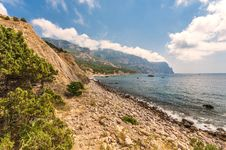 Coastline With Pine Trees Royalty Free Stock Image