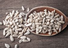 Free Sunflower Seed Royalty Free Stock Images - 25008949