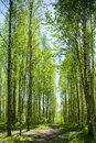 Free Path In Summer Forest Stock Images - 25011974