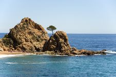 Spain.  Tossa De Mar. A Pine On The Rock. Stock Images