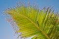Free Palm Leaf Royalty Free Stock Image - 25023626