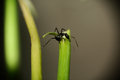 Free Black Ant Stock Photos - 25026063