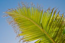 Free Palm Leaf Royalty Free Stock Image - 25023626
