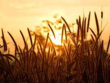 Grass And Sunset Background Stock Images