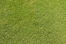 Free Patch Of A Putting Green Stock Photo - 25033570