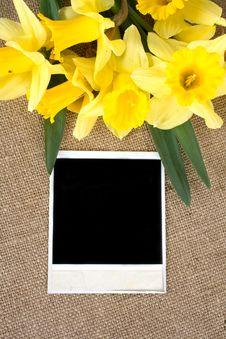 Free Yellow Daffodils Stock Photo - 25035200