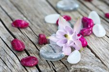 Columbine Blossom Stock Photo