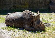 Free Grey Rhinoceros In City Zoo Royalty Free Stock Image - 25036436