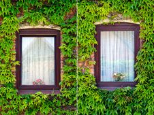 Free Windows With Ivy, Set Of Two Royalty Free Stock Photography - 25042137