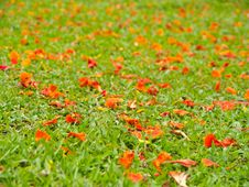 Free Petal On Grass Field Stock Images - 25043784